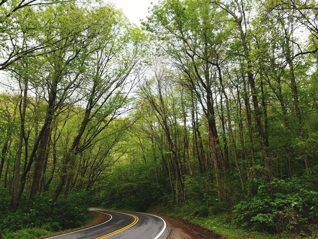 Best kind of lost. Tree Tunnel Appalachian Mountains Asheville, NC Tree Green Color Nature Growth Tranquility Outdoors No People Day Beauty In Nature Road Sky Lush - Description