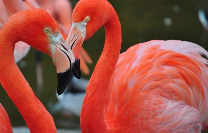Close-Up Of Flamingoes In Water