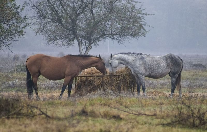 Peaceful morning Animals Autumn Calm Colors Dawn Details Field Fog Horses Landscape Lights Love Mist Moments Mood Morning Nature Peaceful Pusztaszer Tranquility
