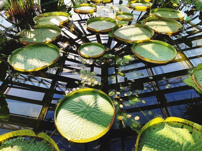 Gewächshaus Tropenhaus Botanischer Garten No People Sunlight Low Angle View Nature Plant Day Outdoors Green Color
