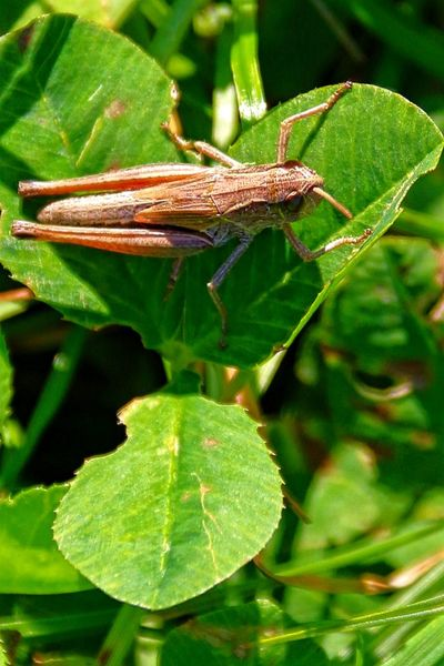 Leaf Tree Insect Close-up Animal Themes Green Color Plant Grasshopper Blade Of Grass