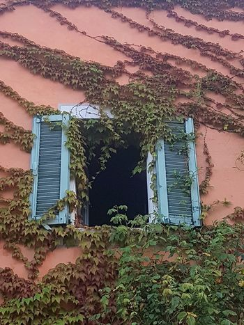 Architecture Window Built Structure Building Exterior No People Outdoors Day Old House Freshness Growth Nature Alta Langa Piedmont Italy Climbing Plant