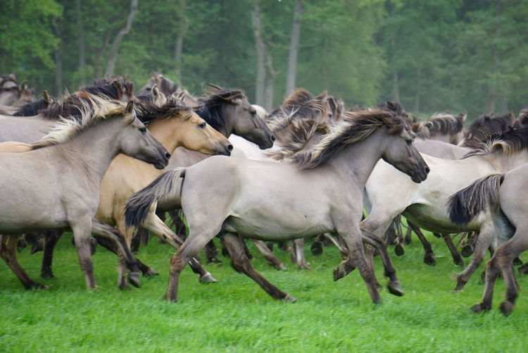 View Of Horses Running On Grass