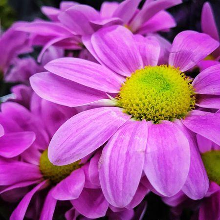 Adding some romance - Flower Flowers Petals Purple Flowers Close-up