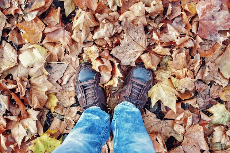 Low Section Human Leg Day Personal Perspective Shoe One Person Real People Outdoors Standing Nature Autumn Day Leaves Park Leaves On The Ground Day Out Autumn Colors Autumn Colourful Nature Different Colors Wearing Blue Jeans Contrasting Colors Only Me