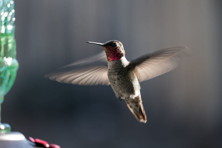 Close-up of hummingbird hovering by bird feeder
