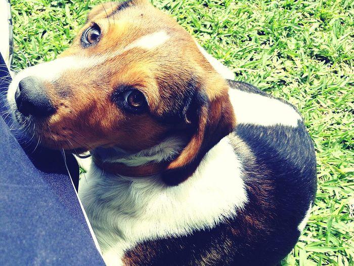 Puppy dog chusco