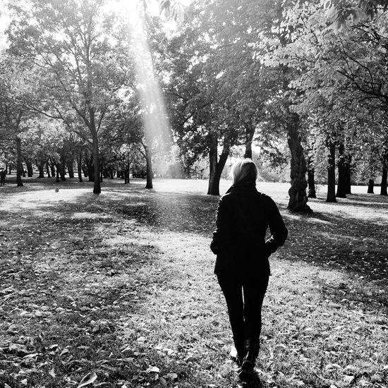 Autumn Autumn Leaves At The Park Urbanphotography London Light And Shadow Blackandwhite Walking Around Wanderlust Pmg_lon