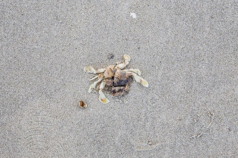 Beach Sand High Angle View Outdoors Day Nature No People Vietnam Crab Dead