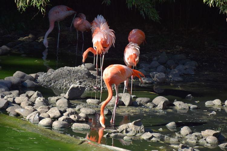EyeEm Selects Flamingo Water Bird UnderSea Underwater Sea Life Animal Themes