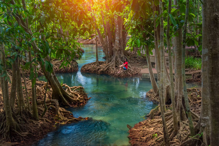 Amazing crystal clear emerald canal with mangrove forest , Krabi province, Thailand Amazing View Mangrove Forest Mangrove Forest Conserve Mangrove Forests Amazing Nature Beauty In Nature Day Forest Green Color Growth Idyllic Land Mangrove Nature No People Non-urban Scene Outdoors Plant Scenics - Nature Tranquil Scene Tranquility Tree Tree Trunk Trunk Water