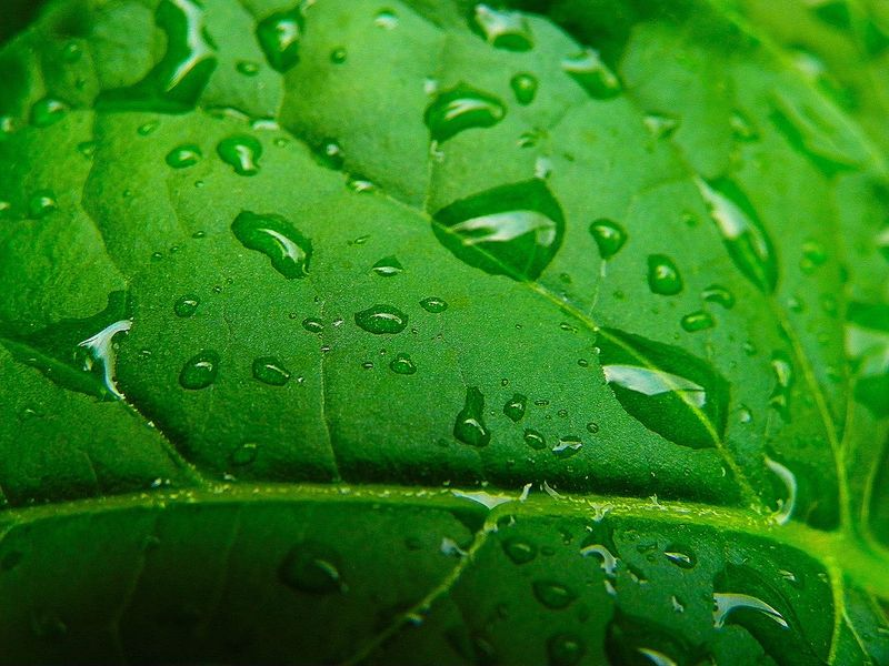 Water Backgrounds Leaf Full Frame Drop RainDrop Close-up Green Color Plant