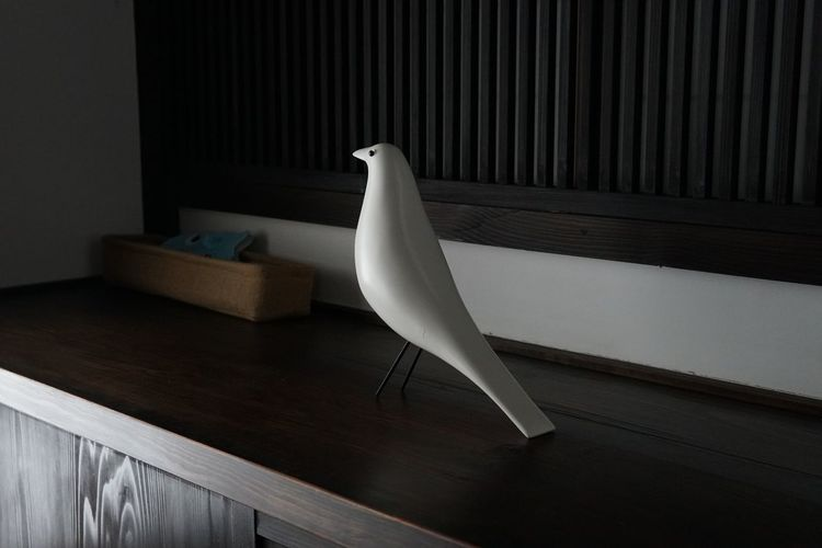 EyeEm Selects Indoors  White Color No People Wood - Material Bird