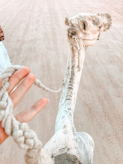 Sharm El-Sheikh Egyptphotography Egyptian Culture Egipt EyeEm Selects Human Body Part One Animal Hand Mammal Human Hand Body Part