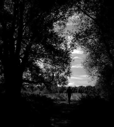 Rear view of silhouette man walking on street amidst trees against sky