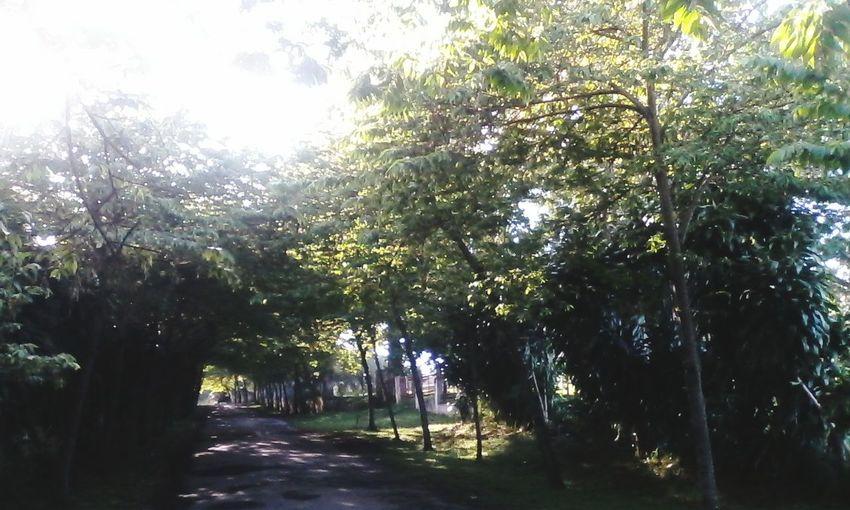 My street home