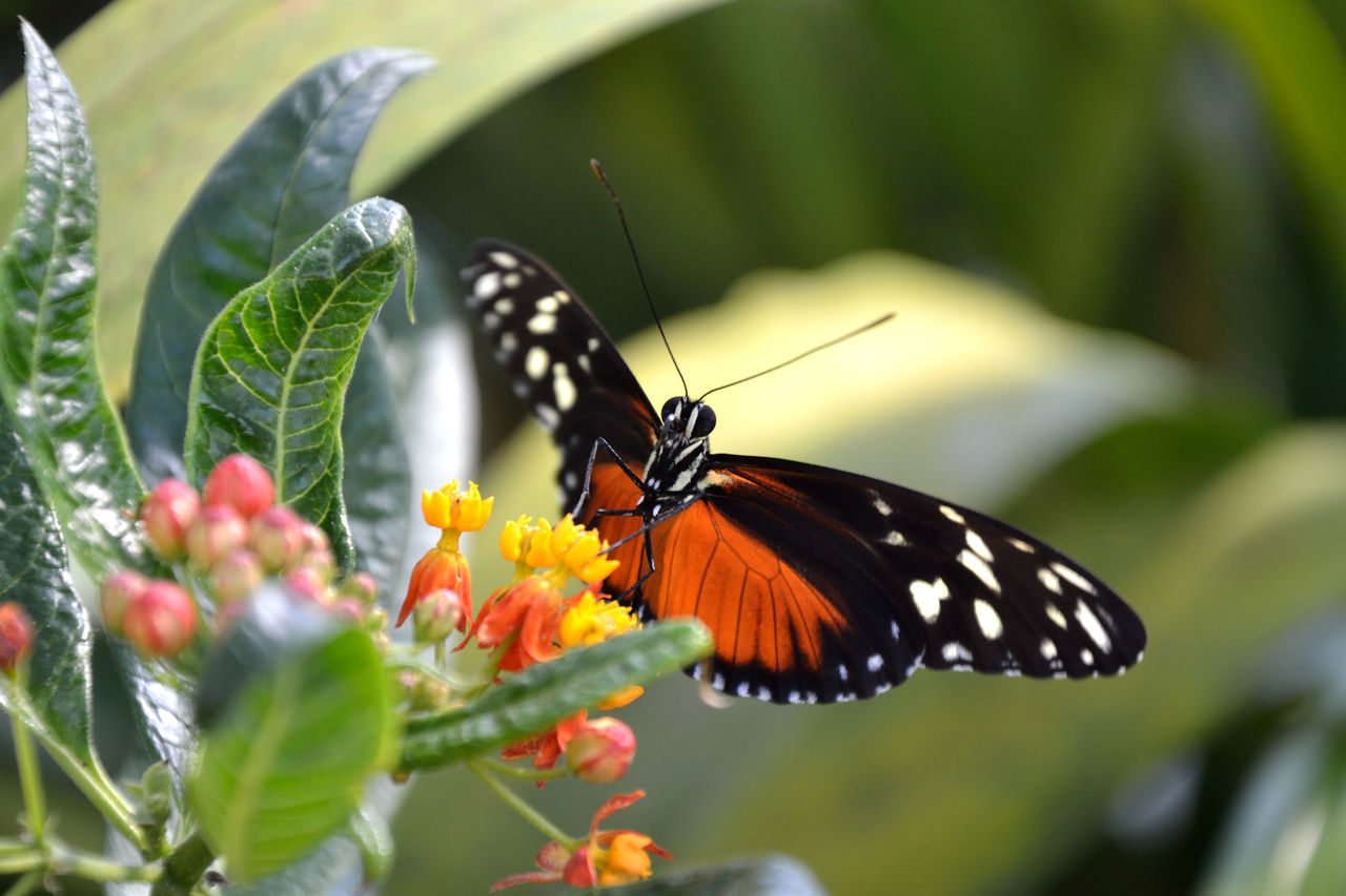 butterfly - insect, insect, animal themes, animals in the wild, one animal, nature, butterfly, animal markings, animal wildlife, no people, plant, outdoors, day, close-up, beauty in nature, fragility, pollination, freshness, perching, flower head