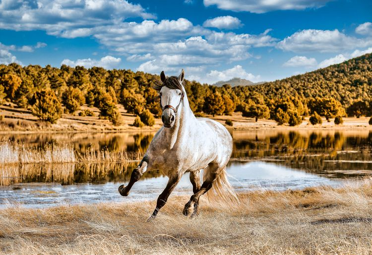 View of a horse in the lake