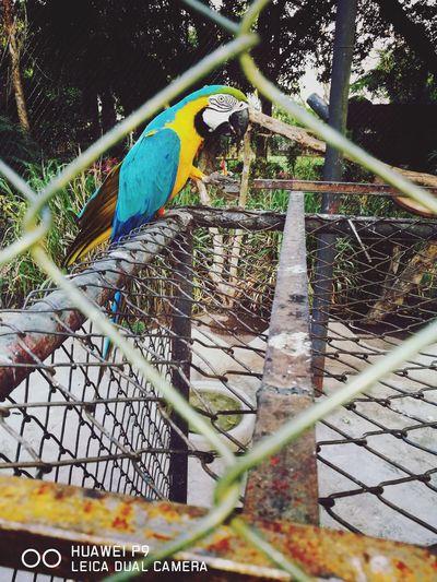 Disfrutando de la naturaleza de mi bella Santa cruz en el zoo Animal Themes Bird Beauty In Nature Animal Representation Summer