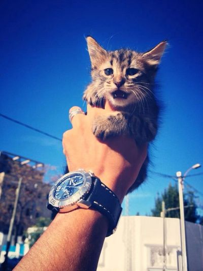 Cat Love Pets Eye4photography  #........it´s love love love..............!!!!!