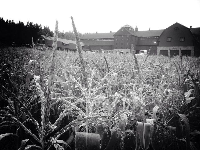 Blackandwhite Nature in Sweden Farm Eye4photography