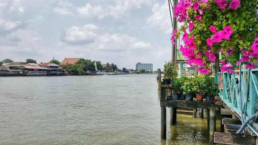 Water Building Exterior Architecture Built Structure Growth No People Beauty In Nature Flower Nature Day Outdoors City Sky Cloud - Sky Nautical Vessel Tree Thailand Photos EyeEm Gallery Flowers, Nature And Beauty Travel In Thailand Thailand Bangkok Thailand. Ko Kret Kohkret EyeEm Team