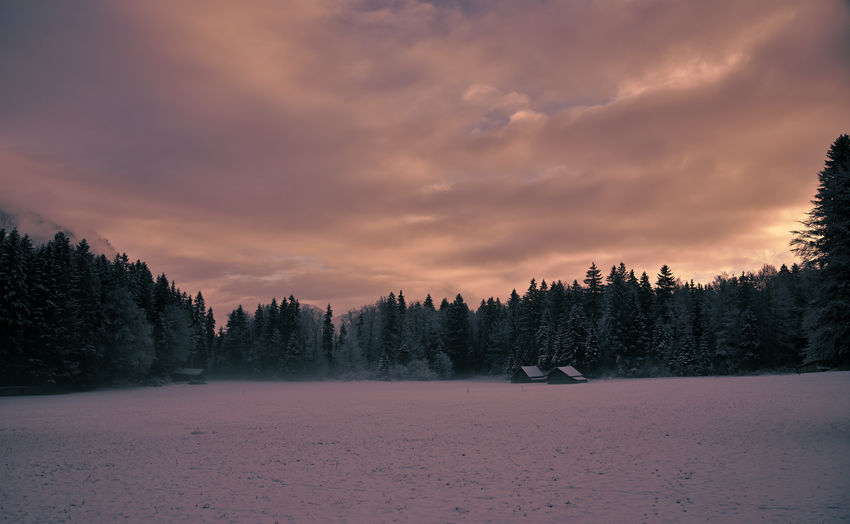 Panoramic view of pine trees on snow field against sky during sunset
