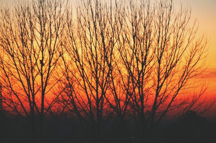 Bare Tree Sunset Silhouette Scenics Beauty In Nature Tranquility Tranquil Scene Branch Nature Orange Color Idyllic Sky Non-urban Scene Majestic Tree Trunk Outdoors Growth Solitude Remote Cloud - Sky