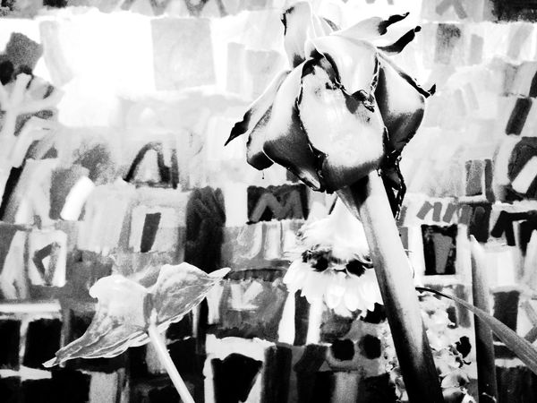 Flowers Flowerporn In Front Monochrome_life Black And White Photography AMPt_community Monochrome EyeEm Bnw Eyeem Monochrome Bw_ Collection