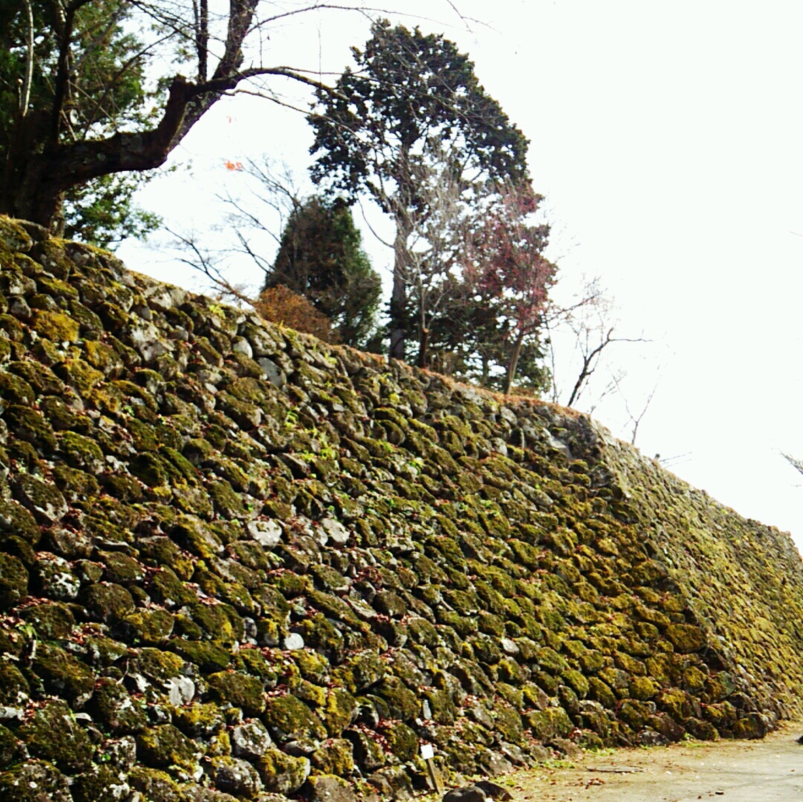 tree, built structure, low angle view, architecture, clear sky, tranquility, sky, rock - object, nature, stone wall, growth, old, day, tranquil scene, plant, wall - building feature, outdoors, stone - object, no people, abandoned