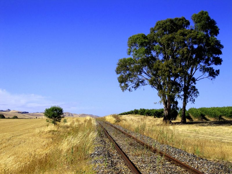 A little used old rail track snakes its way across the valley in South Australia Australian Landscape Barossa Valley Beauty In Nature Blue Blue Sky Clear Sky Day Field Growth Landscape Nature No People Outdoors Rail Rail Transportation Railroad Track Scenics Sky Sunburnt Tranquil Scene Tranquility Transportation Tree Vines