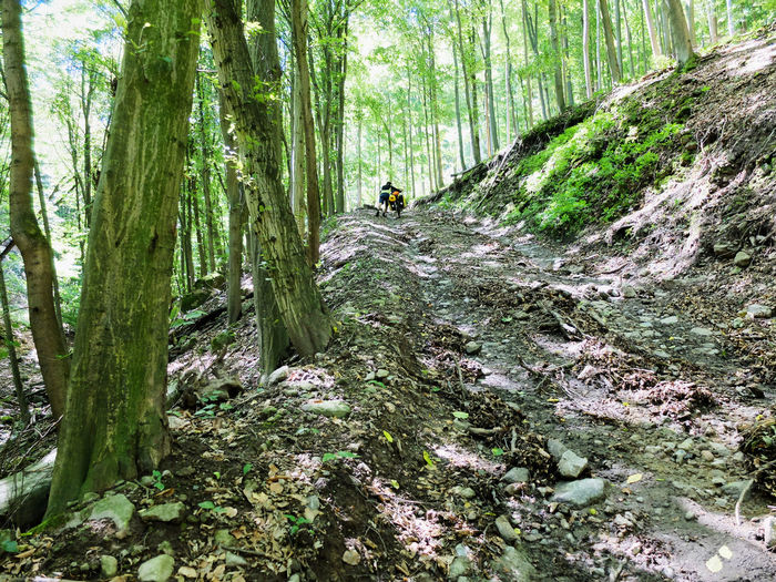 Adventure Beauty In Nature Bike Packing Bike Touring Day Exploration Forest Hiking Landscape Men Mountain Nature One Person Outdoors People Real People Scenics Tranquil Scene Tranquility Tree Tree Trunk Walking