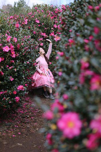 Hanbokkorea Hanbok Forest Photography Forest Flower Head Camellia Flower Camellia JEJU ISLAND  Pink Color Plant Growth Flowering Plant Flower Pink Color Nature 2018 In One Photograph 2018 In One Photograph Redefining Menswear