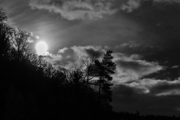 moon at night on a cloudy sky Beauty In Nature Cloud - Sky Coniferous Tree Day Growth Low Angle View Moon Moonlight Nature No People Non-urban Scene Outdoors Planetary Moon Plant Scenics - Nature Silhouette Sky Sun Tranquil Scene Tranquility Tree