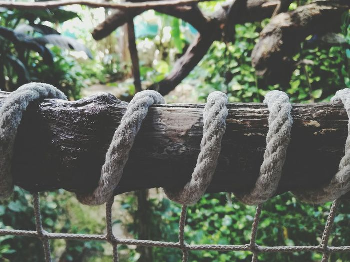 Close-up of rope against trees