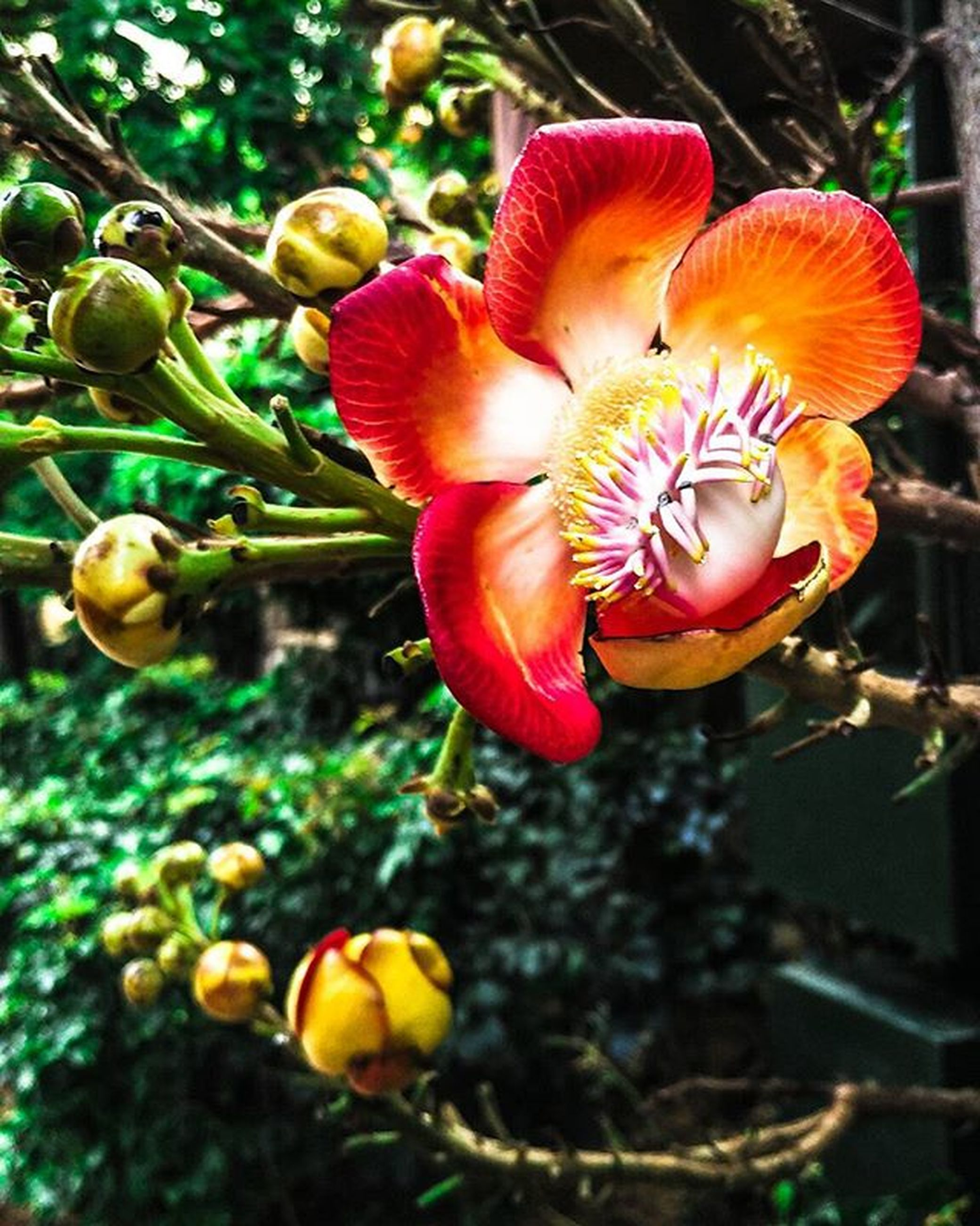 flower, growth, freshness, petal, fragility, beauty in nature, focus on foreground, close-up, flower head, nature, bud, plant, blooming, tree, outdoors, day, no people, in bloom, orange color, park - man made space