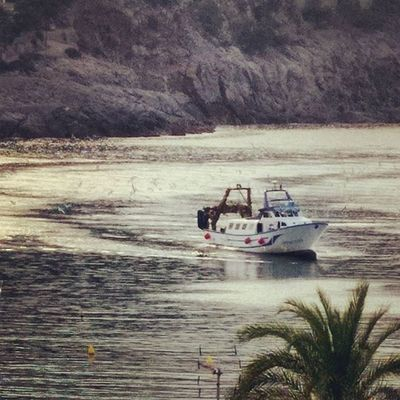 Fish trawler coming home, warmly welcomed by seagulls! Portdesóller Mallorca Baleares SPAIN