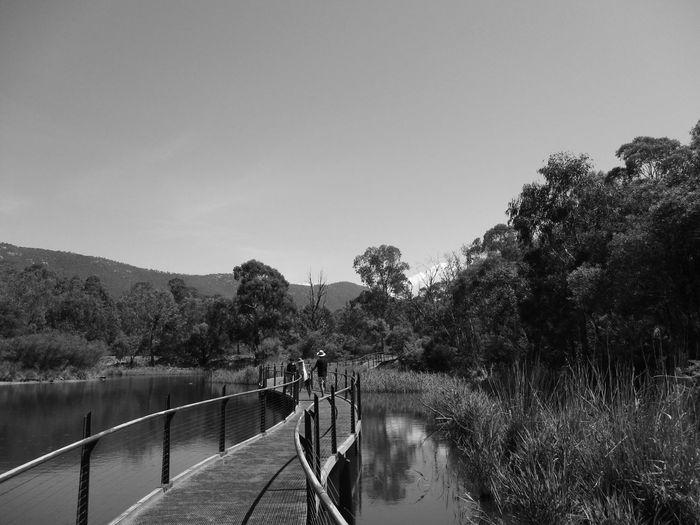 Wetlands #2