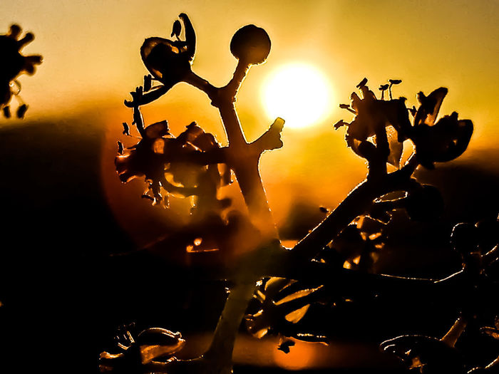 silhouette of