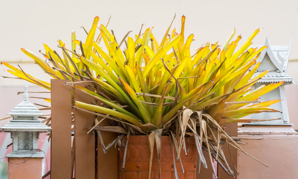 Plant in pottery on wall for decorate Built Structure Close-up Day Decoration Dried Flower Growth Lamp Low Angle View Multi Colored Nature Nature No People Outdoor Outdoors Park Plant Pottery Yellow