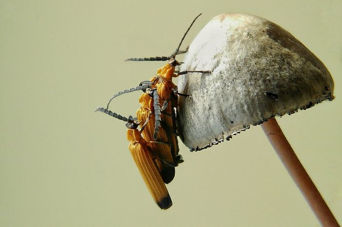 Insect Animals In The Wild Animal Themes One Animal Animal Wildlife No People Nature Close-up Fragility Day Outdoors
