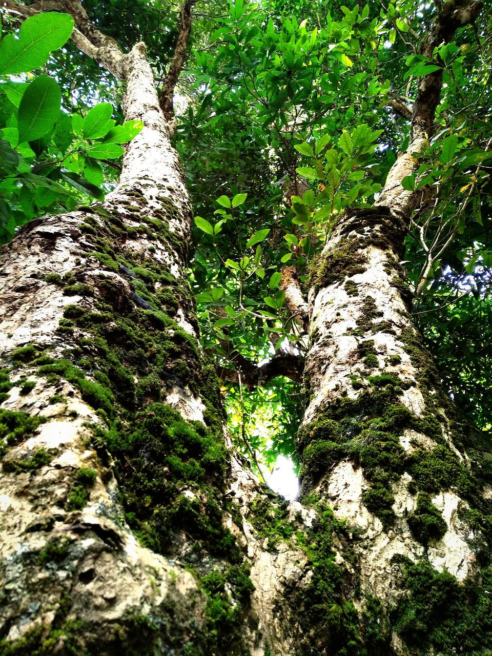 nature, tree trunk, tree, forest, growth, no people, low angle view, moss, day, outdoors, beauty in nature, close-up