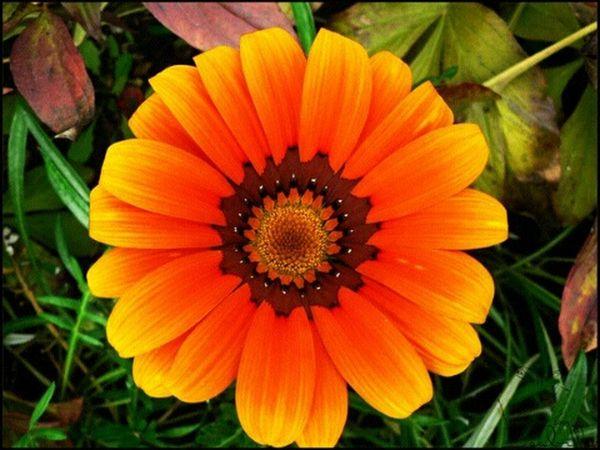 цветок  оранжевый яркость Природа красота осень солнце
