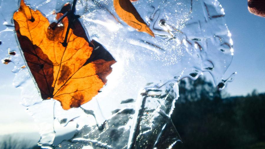 Ice Iced Blue
