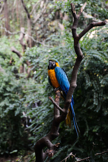 Blue and yellow macaw perching on tree stump by trees