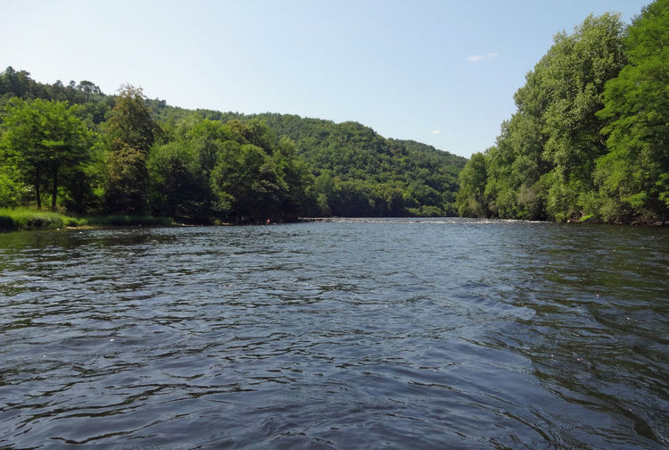 On the river Summertime Traveling Flussufer Wald Waldlandschaft Forest View France River Riverside River View Fluss Flussufer Fluss Im Sommer Dordogne Dordogne River Freedom Paddling Paddeln Leisure Activity Sports Tree Water Forest River Sky A New Beginning