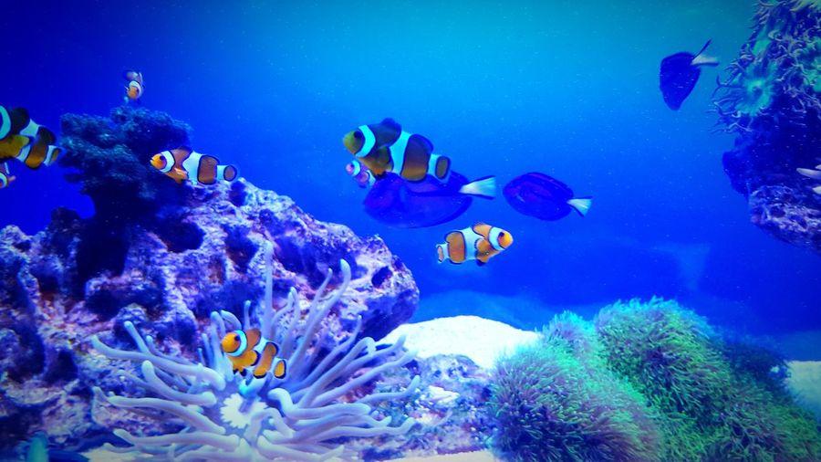 Sea Life Underwater Coral Multi Colored Beauty In Nature Water Nature Aquarium Swimming Animals In The Wild Dori Living Organism Nemo Scenics Palma Aquarium Photography Palma De Mallorca Malle Beautiful Day Taking Photos Wonderful Mallorca Nature Find Nemo Finding Dory