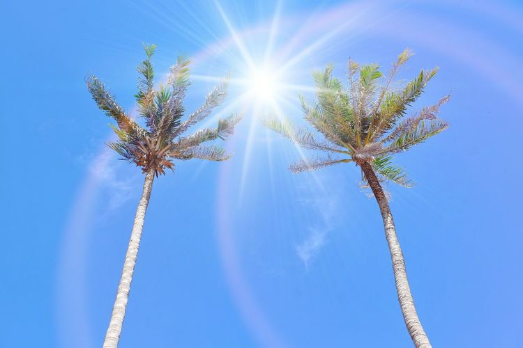 Blue Sun Sky Summer Low Angle View Sunlight Nature Backgrounds Outdoors Day Beauty In Nature No People Space