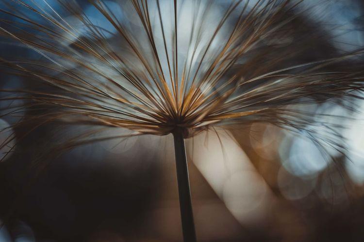 Close-up of dandelion against sky