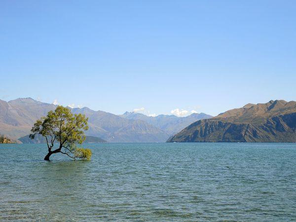 New Zealand New Zealand Beauty New Zealand Landscape Wanaka Lake Wanaka Tree Tree In Lake Landscapes With WhiteWall